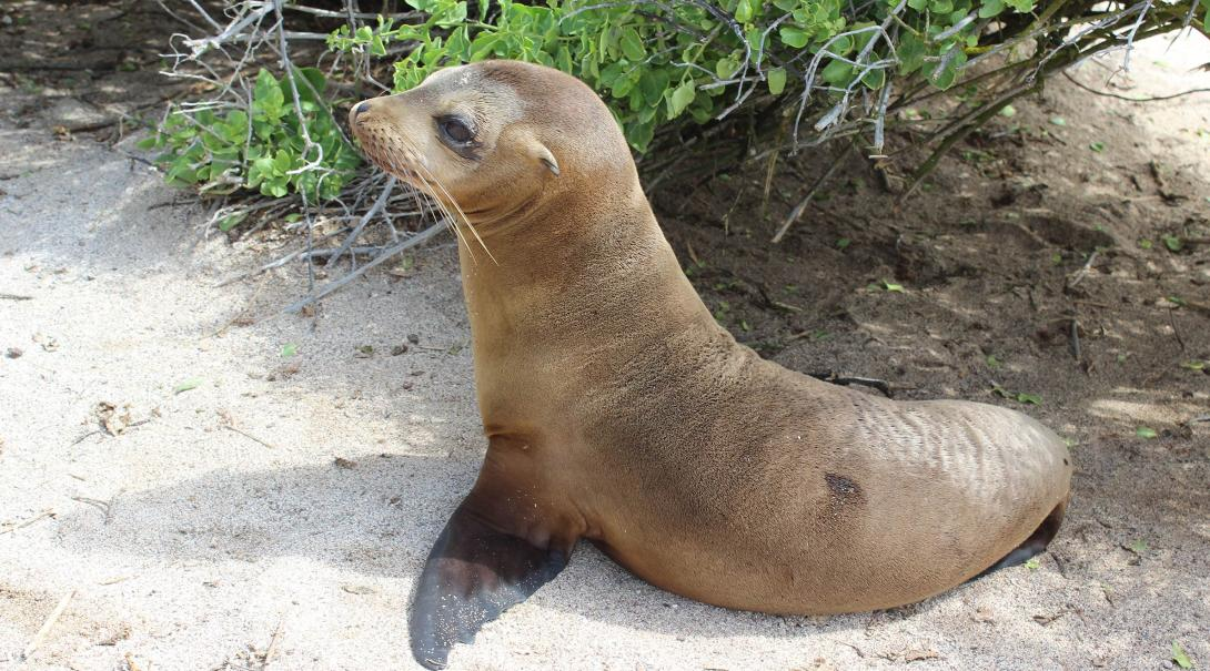 Projects Abroad volunteers monitor the sea lions as part of the conservation work experience in the Galapagos